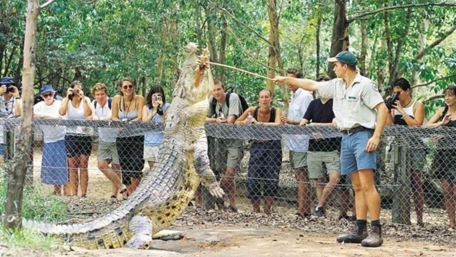 Crocodile  Jpeg