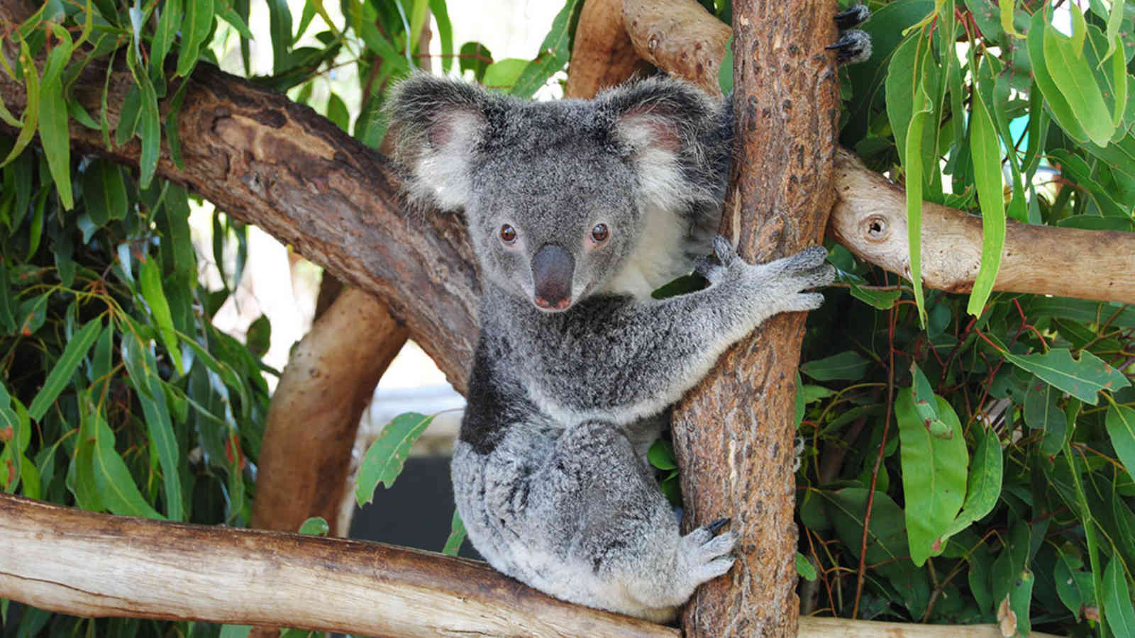 Billabong Sanctuary Townsville Attractions